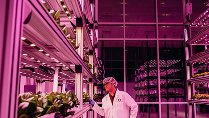 Philips Lighting - Agricultura urbana